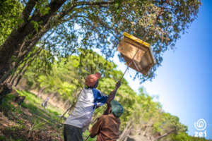 Farmers in Luanshya mounting a new beehive