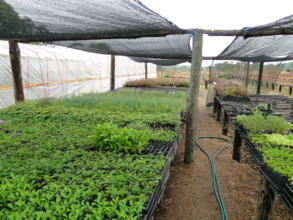Tree nursery with seedlings ready to be planted