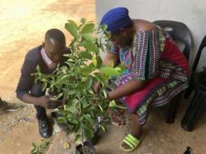 Women-led tree nurseries