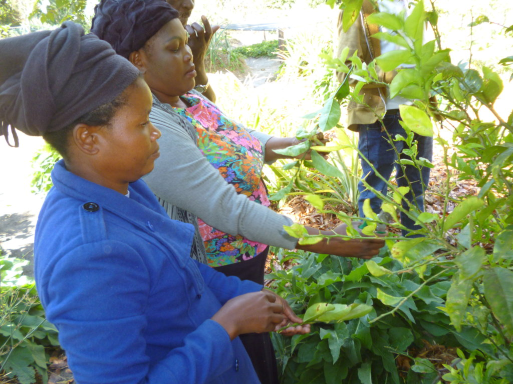 Engage farmers in reversing deforestion in Zambia
