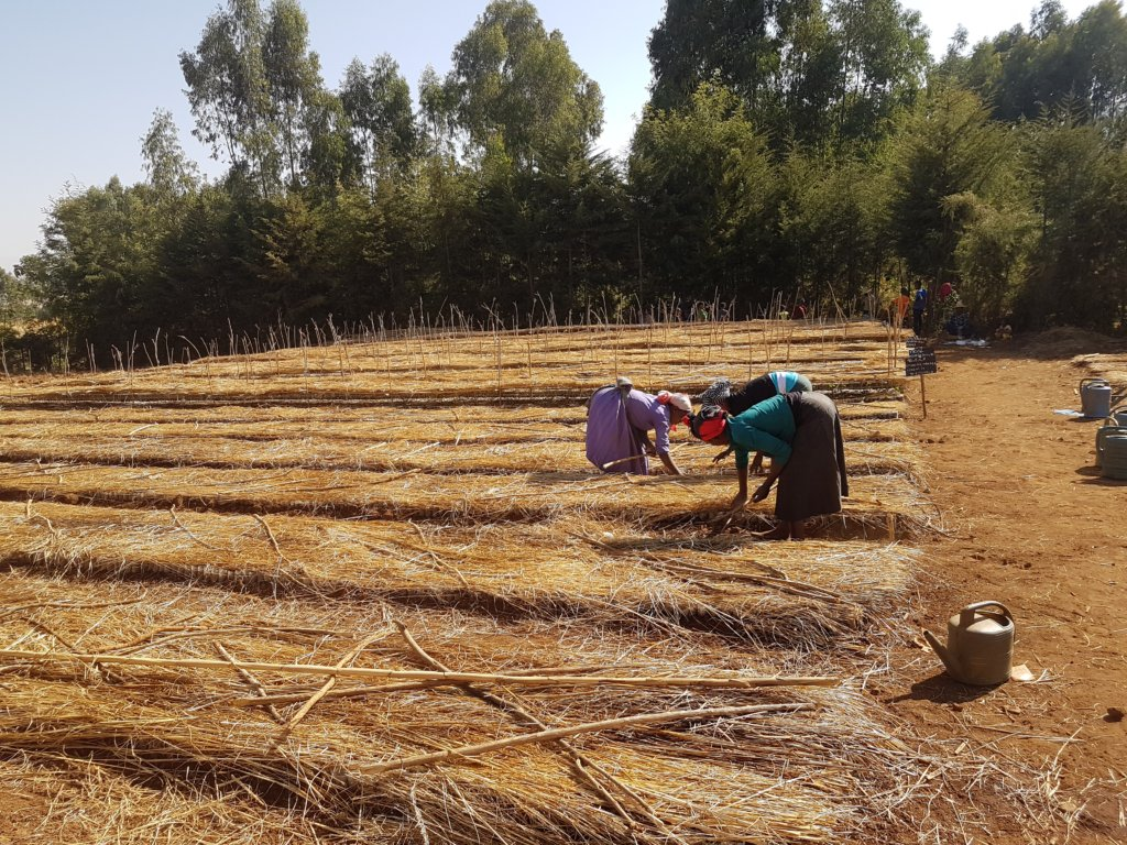 Plant 10,000 trees to grow resilience in Amhara