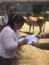 Providing work animal