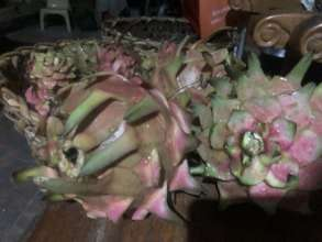 Processing of dragon fruit into wine and vinegar