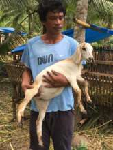 Young goat released to a beneficiary