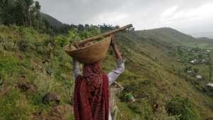 Woman carrying tree saplings