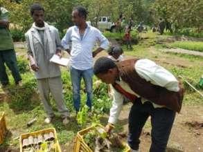 Gebreyesus G. examining tree seedlings