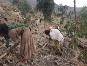 Women participation in planting sites preparation
