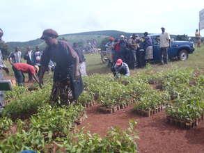 Women recieving tree seedlings.