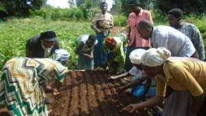 Women preparing seedbed for cabbage seeds