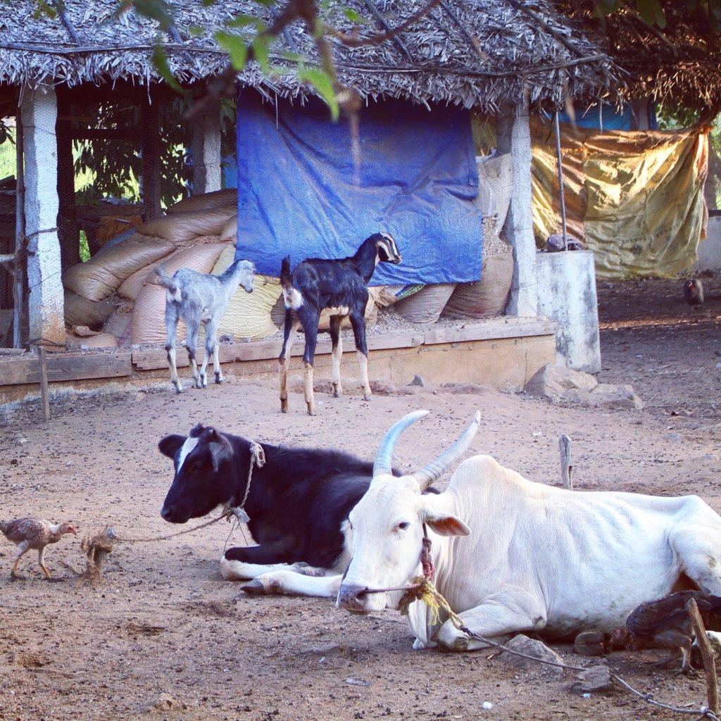 Sustainable Farming to Support Tamil Nadu Children