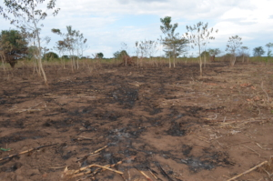 Wild fire destroys everything in the dry season