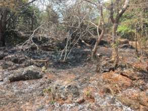 Fire burning through forested parts of farm