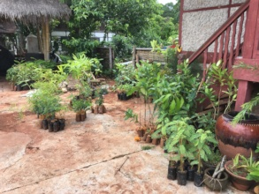 Fruit, flower and forest trees ready to be planted