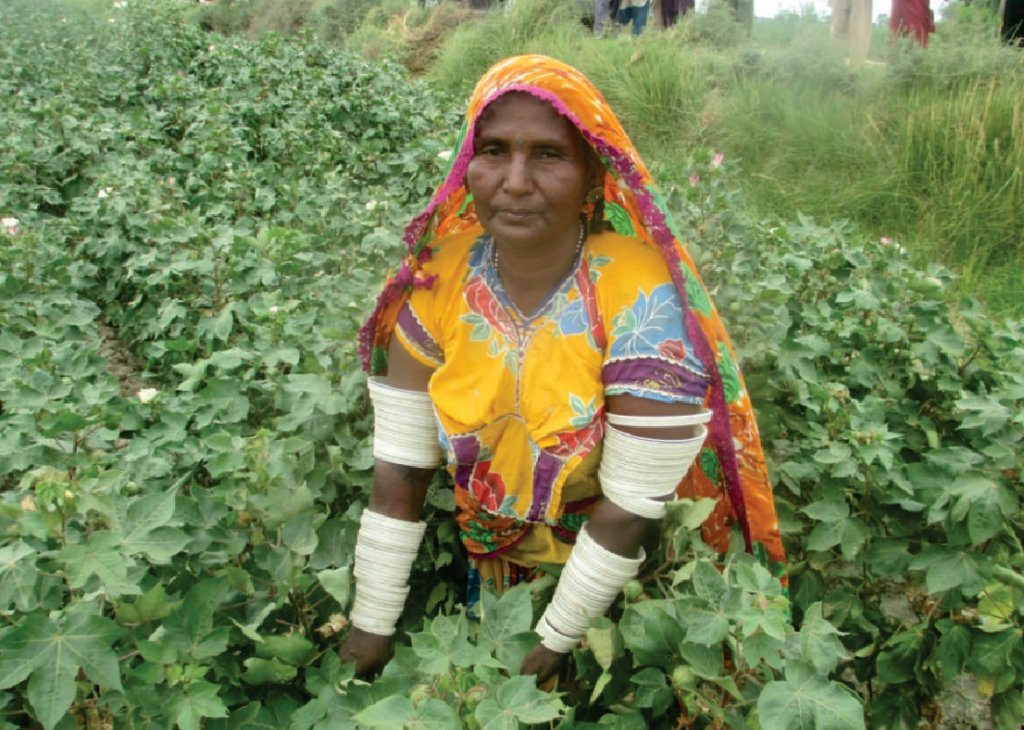 Save 1000 Cotton Picking Pakistani Women's Health