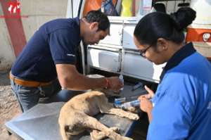 parvo treatment in our mobile clinic van
