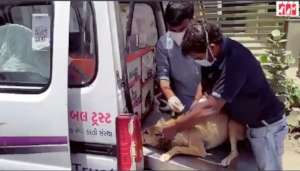 Moti treated by our vet