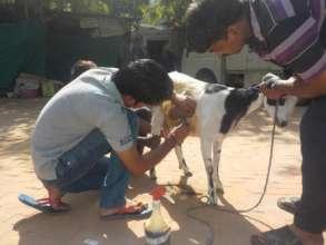 Providing care to abandoned animals