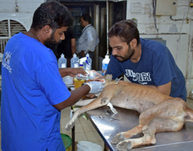 Treatment by JCT Vet and Staff