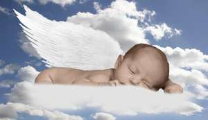 Our Lost Angels ~ Soar Into Forever Homes