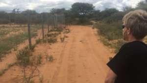 Cheetah Release - Kamin, Cyclone, Elwood and Zin