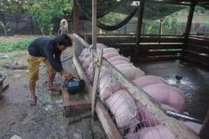 Pig pen of Suoy Chantoen