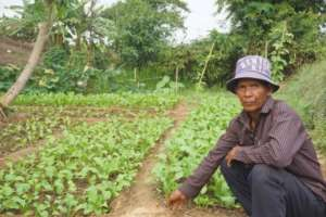 Hong Chak and his vegetable garden
