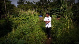 Mr. Korlong at his lush green vegetable garden