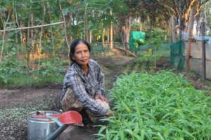 Kunthy is taking care her vegetable farm