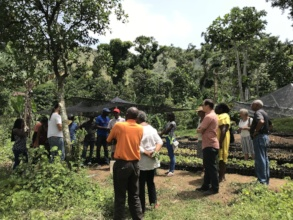 KOKAP & Lambi staff visiting seedling site