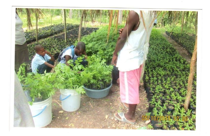 Repair/restore food producing gardens in Haiti