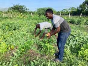 Agro Raphael & program leaders harvest the garden