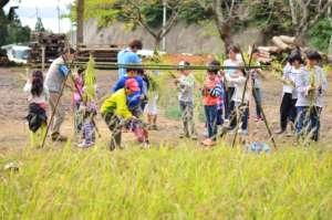 Children participating in rice harvest