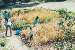 Organic rice farming using recycle waste water
