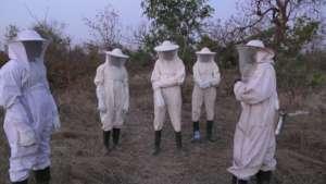 Ready for honey harvesting