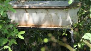 Hive which need some cleaning