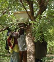 Placing the hives in a tree