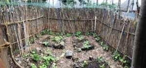 New Health Centre garden