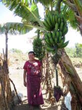 nutritous bananas in Dolores' back garden