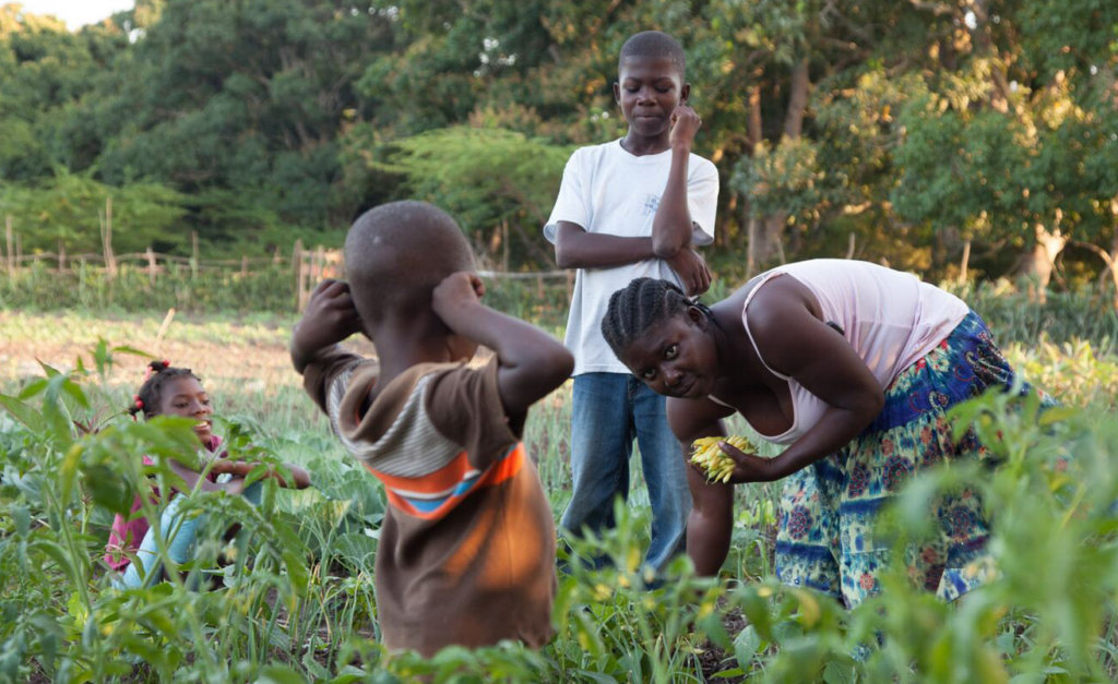 Revive 1000 Haiti Gardens After Hurricane Matthew