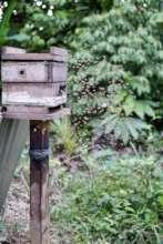 Maijuna stingless beehive