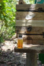 Stingless Beehive and Honey