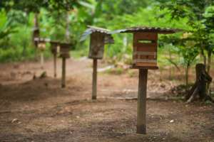 Stingless Beehives