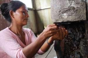 Tarkis Harvesting Honey