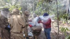 sustainable harvesting of honey