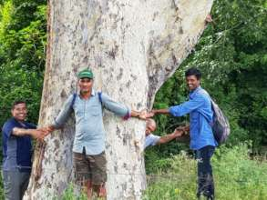 Team Junglescape hugging Giant tree in Lokkere