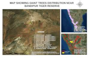 Giant Tree map-Bandipur
