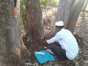 Tree worship as conservation practice
