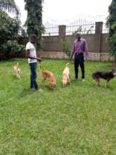 Moses adopted 4 dogs!