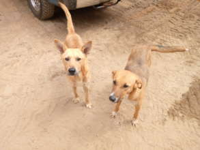 2 dogs rescued from a Roko construction site