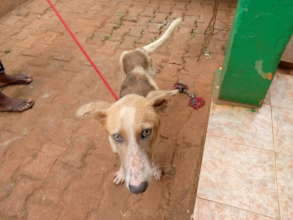 Police's owner could no longer afford to keep him